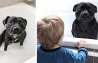 Questo cane si è intrufolato nella vasca dei vicini per fare il bagno con i loro bambini