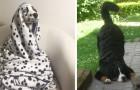 17 irresistibili foto di cani con una spiccata personalità teatrale