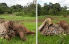 L'elefantino orfano viene portato in un rifugio dove trova l'affetto di uno struzzo che crede di essere un elefante