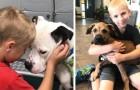 Après avoir visité un refuge, cet enfant de 7 ans décide de trouver un foyer pour tous les chiens et il y parvient