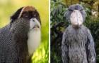 11 animaux auxquels la nature a voulu donner une apparence qui ne passe pas inaperçue