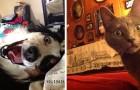 11 djur som som överraskat sina mänskliga vänner på morgonen med sina konstiga beteenden