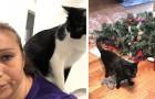 Ces 12 photos montrent ce que c'est que de vivre avec un chat coquin à la maison