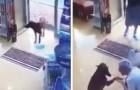 Un cane randagio si reca in farmacia per farsi curare: la scena è stata tutta ripresa dalle telecamere