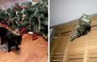 21 grappige foto's die laten zien dat het hebben van een kat in huis een zeer veeleisende taak kan zijn