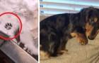 Il a mis une patte sur la neige et ça lui a suffi : ce chien déteste le froid et refuse de quitter la maison