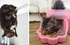 16 foto's die alle sympathie van katten laten zien die zich in absurde situaties en posities bevinden
