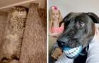 18 scatti fortunati che hanno beccato i nostri animali domestici in momenti impensabili