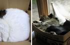 Katten liggen graag in kartonnen dozen omdat het stress vermindert: deze 9 foto's bevestigen het