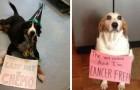 Diese mutigen Hunde wurden am Ende ihres Kampfes gegen den Krebs verewigt