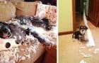 12 lustiga bilder på hundar som blir tagna på bar gärning