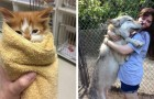 14 photos that show what it is like to work in an animal shelter