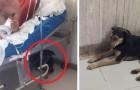 Deze twee honden volgden hun baasje naar het ziekenhuis, om hem niet alleen te laten na de operatie