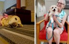 En este hotel es posible cuidar a un perro durante la permanencia y decidir luego si adoptarlo o no