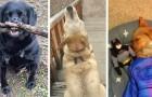 13 Bilder von bezaubernden Hunden, die in ihren lustigsten Momenten gefangen sind