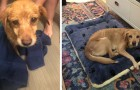 A man accidentally leaves the door open at night and finds a dog in the living room and in the end, he adopts it