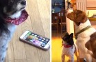 After 16 phone calls in half an hour, the police show up to discover it was dogs that had called