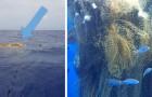 Er werd een enorm drijvend visnet gevonden: er zitten tientallen haaien in verstrikt