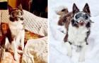 Fanno indossare al cane gli occhiali da sci: quando si rende conto che può guardare sotto la neve impazzisce di gioia