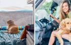 Ze verlaat haar vriend en drie banen en besluit met haar geliefde hond het land rond te reizen in haar busje