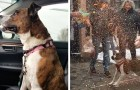 Adopted after 500 days in an animal shelter, this dog was given a big farewell party