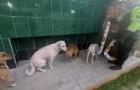 Certains chiens errants font la queue devant les distributeurs de nourriture et d'eau que la police a installés pour eux