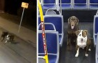 A bus driver lets two dogs get on her bus that were lost in the icy streets and helps get them back home