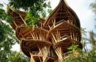 Deze vrouw stopte met haar carrière om huizen van bamboe te bouwen in Indonesië