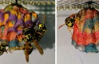 Mettono a disposizione della carta colorata a delle vespe e loro costruiscono dei nidi psichedelici e arcobaleno