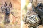 Questa fotografa è riuscita a cogliere i momenti più belli dell'improbabile amicizia tra un cane e un gufo