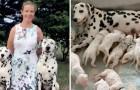 A história de Miley, a dálmata australiana que teve 18 filhotes, batendo todos os recordes