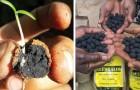 Queste palline piantano 20.000 alberi in 20 minuti: è il modo più semplice di combattere la deforestazione