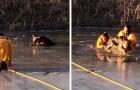 De heldhaftige redding van een pup die in een bevroren meer was gevallen door twee dappere brandweerlieden