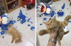 De kat vernietigt de Lego-creatie van 2.432 stukken, en aan zijn uitdrukking te zien lijkt hij er geen spijt van te hebben