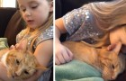 In this moving video, a 4-year-old girl sings a gentle song to comfort her terminally-ill cat