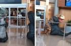 Si mascherano da dinosauri per andare a prendere la nonna in aeroporto, ma lei ha pensato di far loro lo stesso scherzo