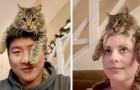 Questo gatto ama appollaiarsi sulla testa dei suoi padroni, come se fosse un comodo cappello