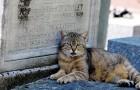 New York: huisdieren kunnen eindelijk worden begraven op begraafplaatsen naast hun eigenaars
