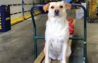 A thief steals his truck in a parking lot and inside was his beloved dog Bella that he never sees alive again