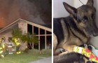 A retired police dog saved his entire human family during a house fire