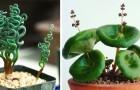 13 plantes d'appartement peu communes qui peuvent donner une touche de vie chez vous