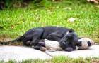 Den här gatuhunden sover tillsammans med ett gosedjur och bilden är rörande