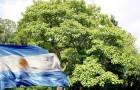 In Argentina un progetto prevede di piantare 100.000 alberi di Kiri, capaci di ridurre gli effetti del gas serra