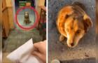 Cette chienne se présente tous les jours devant la porte d'un restaurant en attendant sa nourriture préférée
