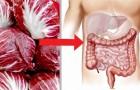 Rosensallat är en grönsak som är rik på antioxidanter och kan rengöra tarmkanalen