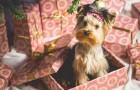 Veel mensen zijn hun met Kerst gekregen puppy's al online aan het verkopen