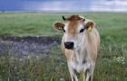 L'ONU suggerisce di ridurre il consumo di carne per contrastare i cambiamenti climatici