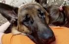 O amor que existe entre um cachorro e seu dono não precisa de palavras