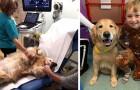 Questi cani aiutano ogni giorno i piccoli pazienti di un ospedale pediatrico a superare ansie e paure