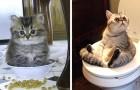 14 unordentliche, aber unwiderstehliche Katzen, die von ihren Besitzern in den absurdesten Situationen überrascht werden